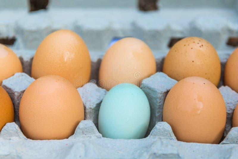 1/2 dozzina uova - una di queste cose non è come le altre fotografie stock libere da diritti