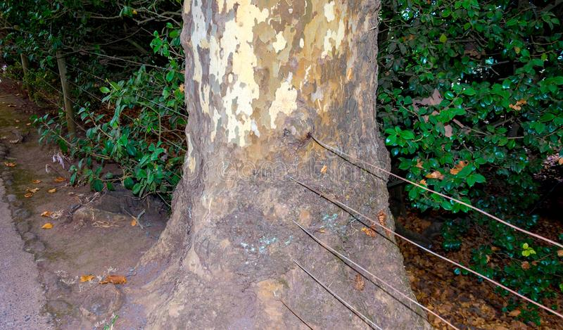 Drähte durch Baum stockbilder