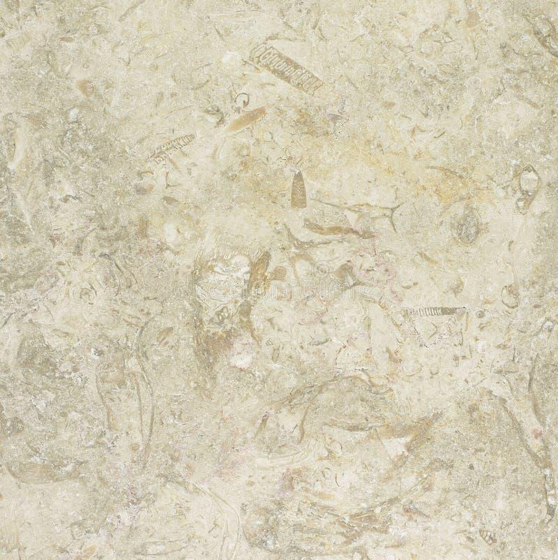 Dråsad kalkstentextur för vit guld royaltyfri foto