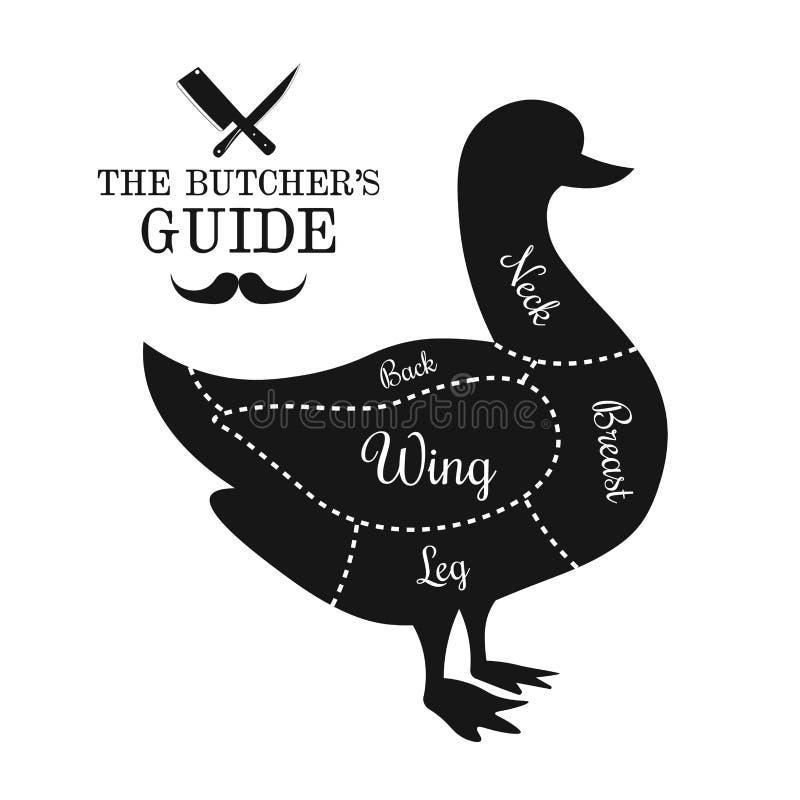 Drób, kaczki mięsa linii diagrama rżnięty graficzny plakat, przewdonik dla b royalty ilustracja