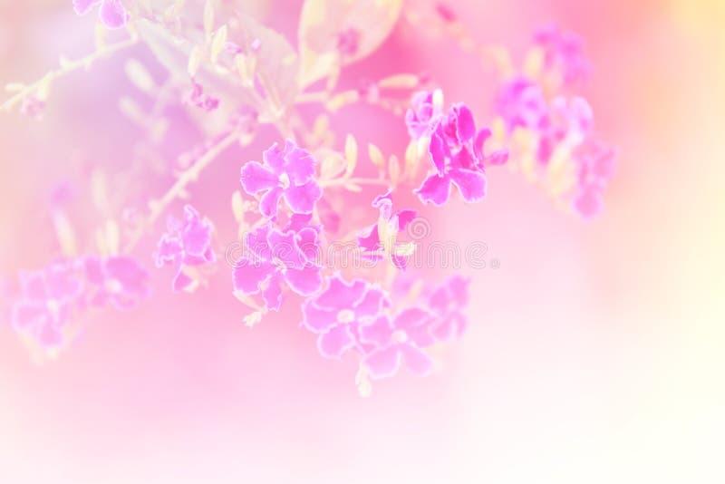 Dröm- bakgrund för blomma arkivfoto