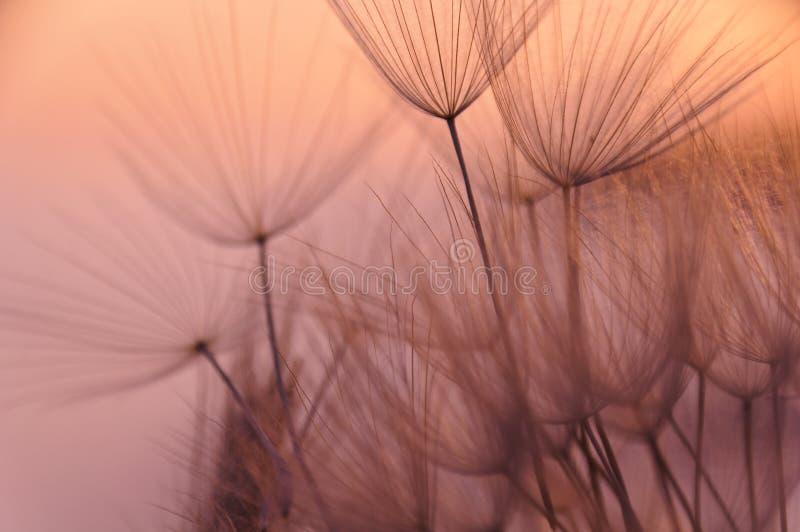 dröm- inneslutat fotografering för bildbyråer