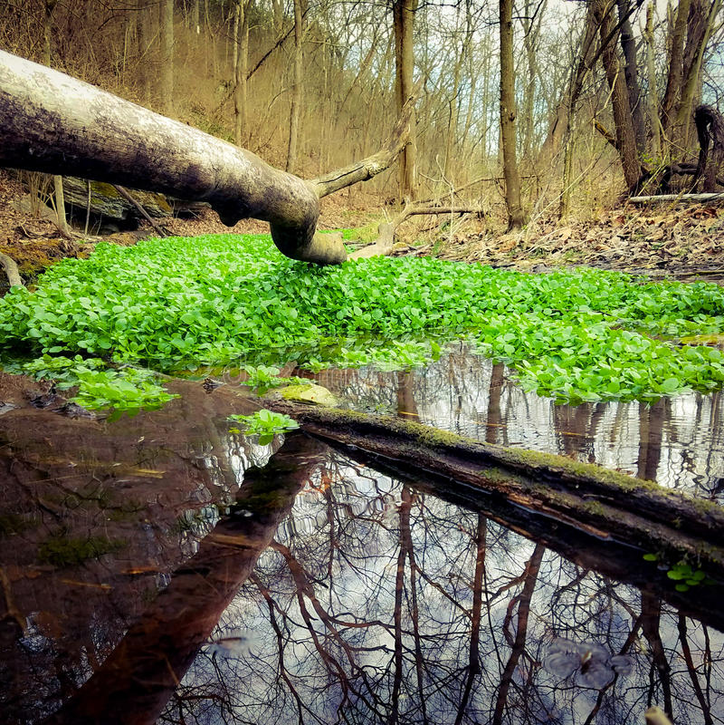 dröm- skog arkivfoton
