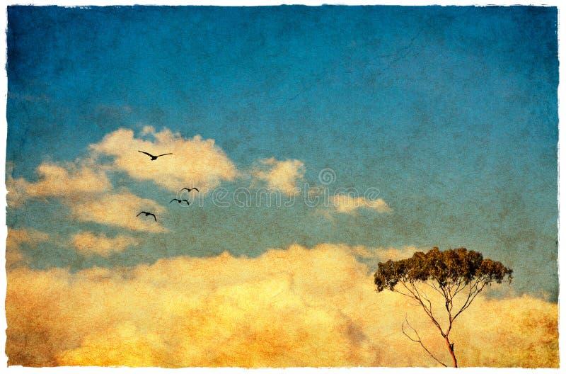 dröm- tree fotografering för bildbyråer