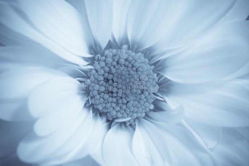 drömlik blomma fotografering för bildbyråer
