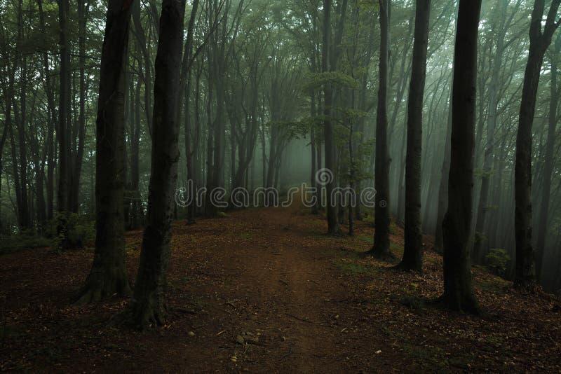 Drömlik dimmig mörk skogslinga i lynnig skog royaltyfri bild