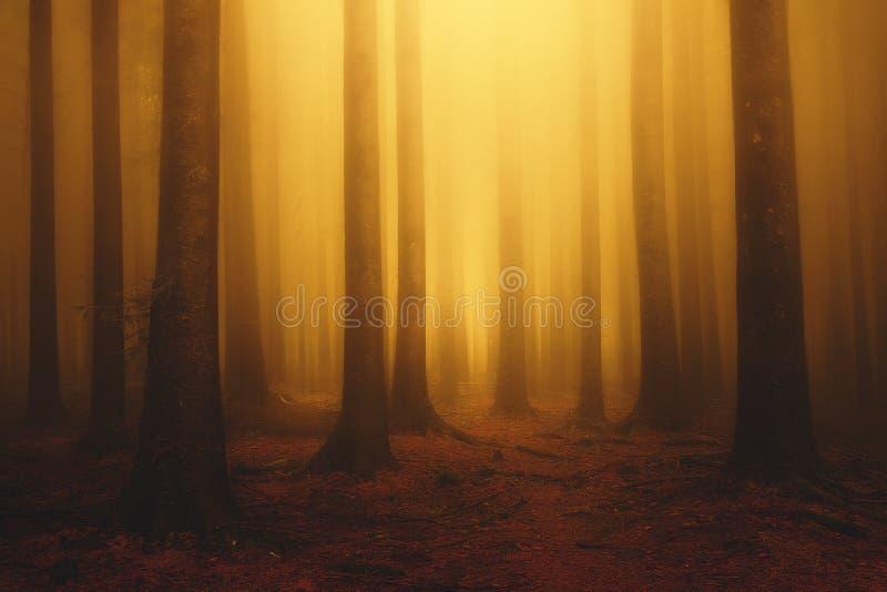 Drömlik skog för dimmig fantasi med solsken på morgonen arkivbilder