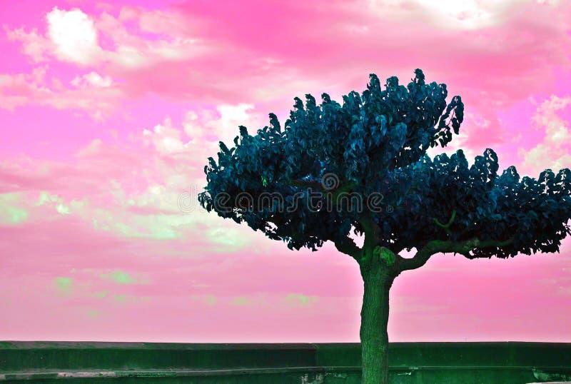 Drömlikt atmosfärfoto för härligt träd och för mjuk rosa himmelhimmel med vände om färger royaltyfri bild