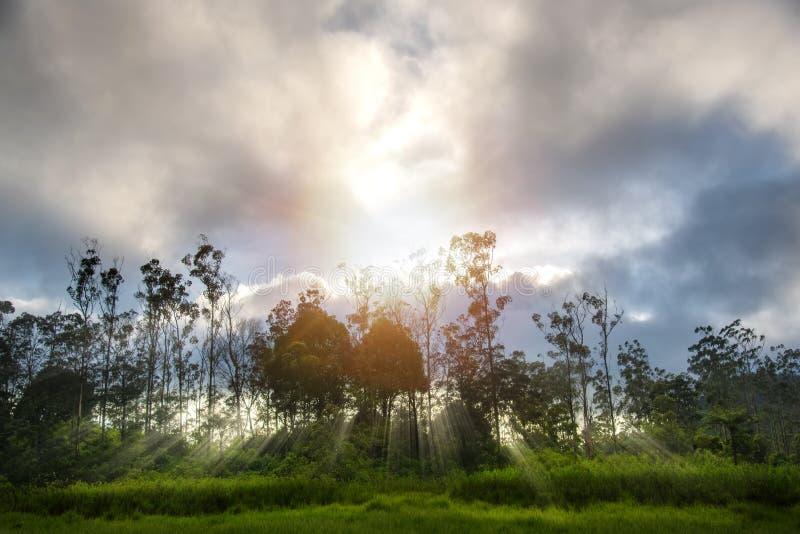 Drömlikt morgonsolsken på slutet av den tropiska djungeln med strålen för molnig himmel och sol Begrepp av den förtrollade sagask royaltyfria bilder