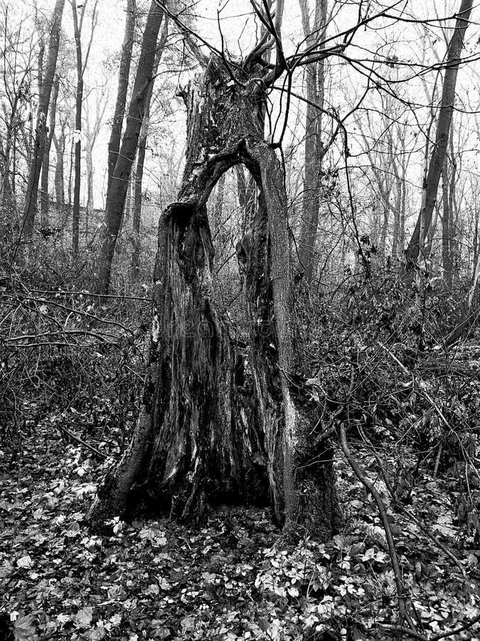 Drömlikt träd fotografering för bildbyråer