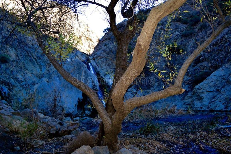 Drömlikt träd & vattenfall fotografering för bildbyråer
