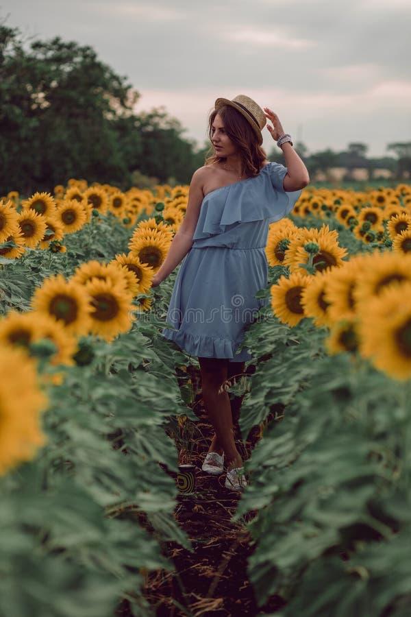 Drömma den unga kvinnan i den blåa klänningen som rymmer en hatt i ett fält av solrosor på sommar, främre sikt Se till sidan huvu fotografering för bildbyråer