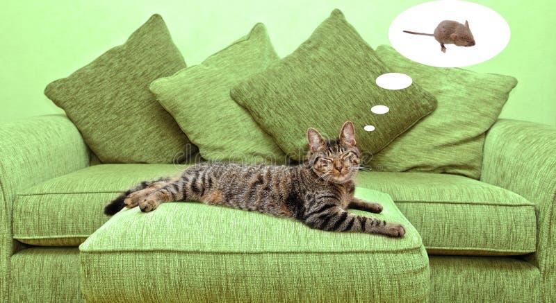 drömma för katt royaltyfria bilder