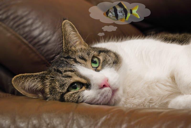 drömma fisk för katt royaltyfri foto