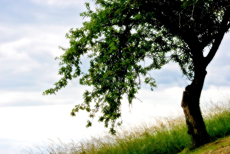 drömma min tree