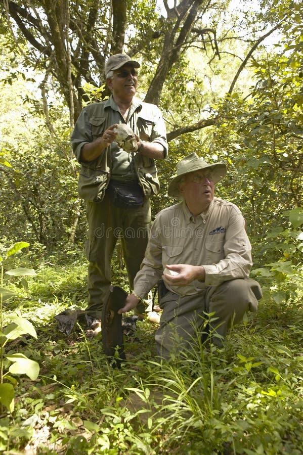 Dr Karmari, en veterinär och grupp som arbetar, i att snärja lägret för att finna snaror som fångar djur i den Tsavo nationalpark arkivbild