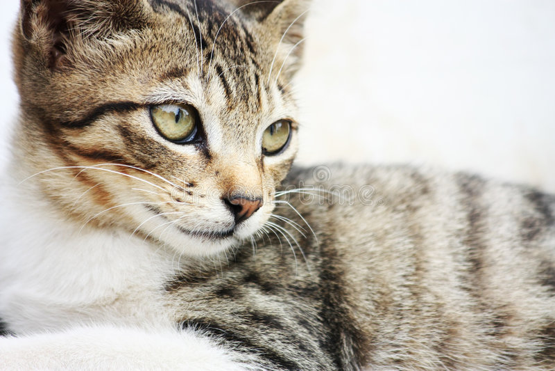 drałująca kot ulica obraz royalty free