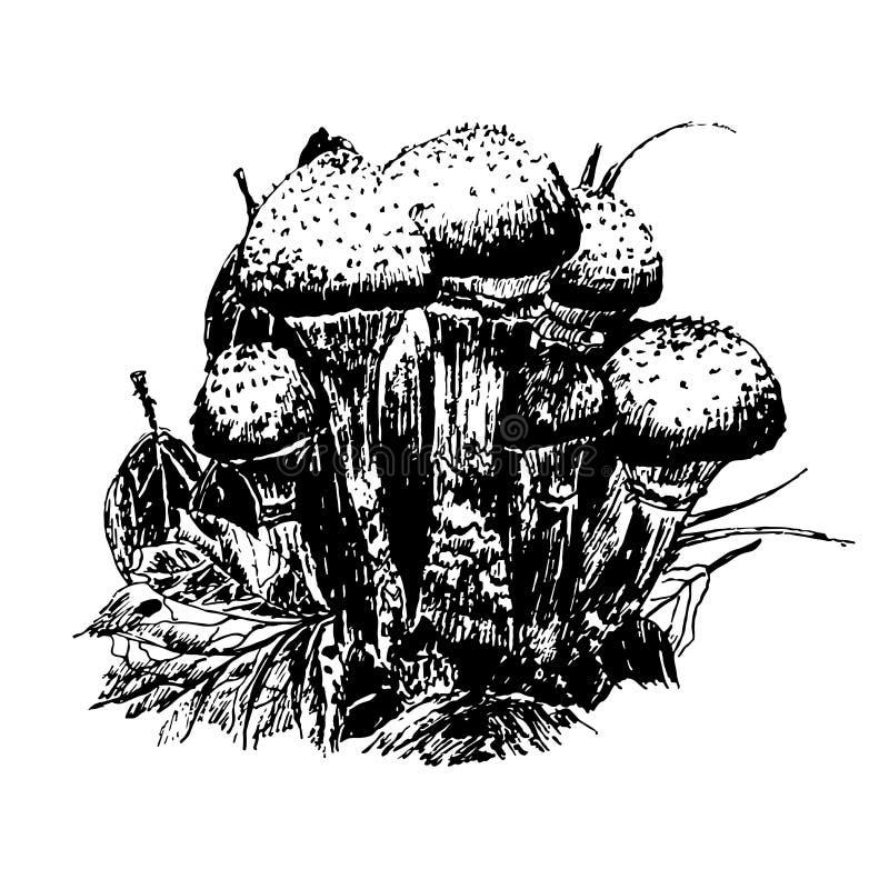 Dra champinjoner i skogen skissa drog illustrationen för diagram handen stock illustrationer