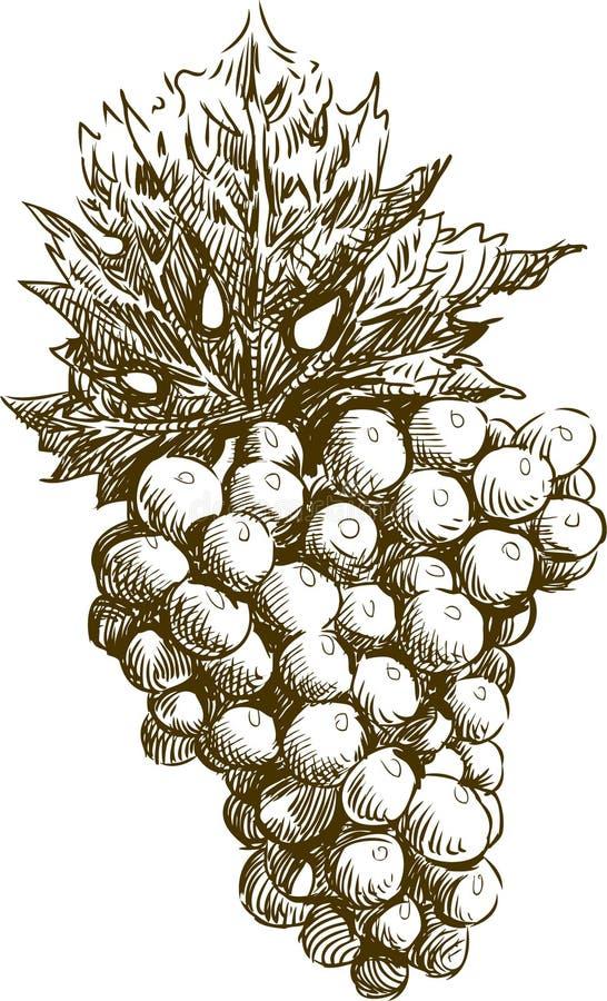 Grupp av druvor med leafen stock illustrationer