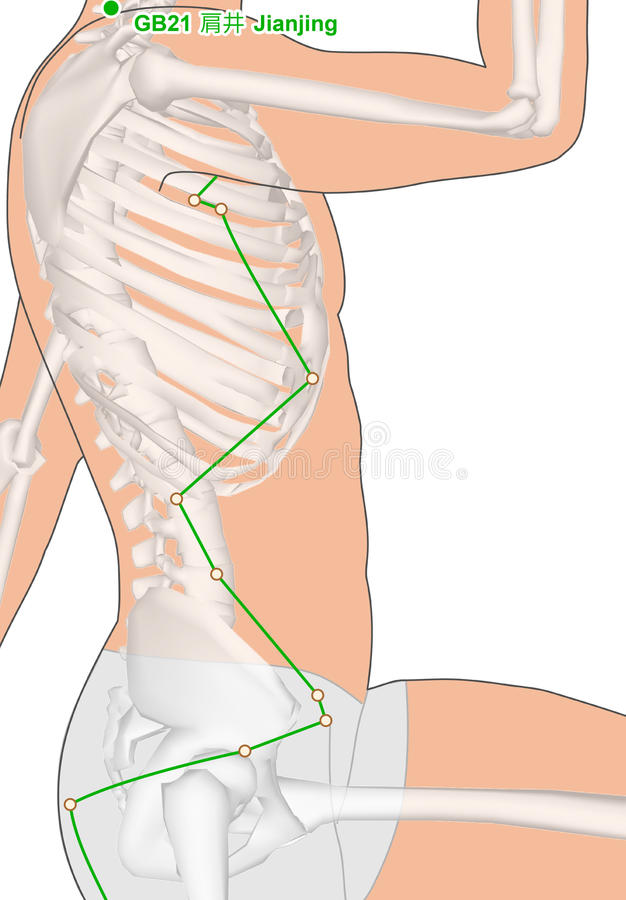 Dra med skelettet, akupunkturpunkt GB21 Jianjing, Gall Bla stock illustrationer