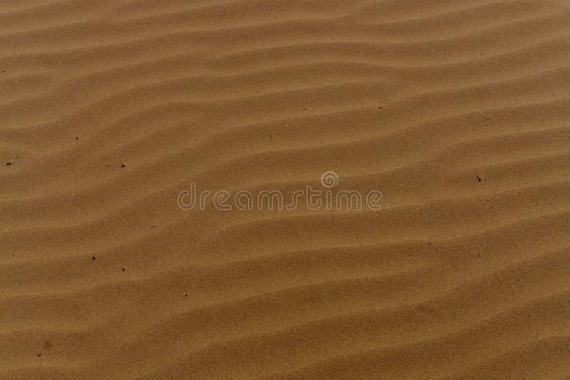 Dra på sanden efter vågorna latvia royaltyfri bild