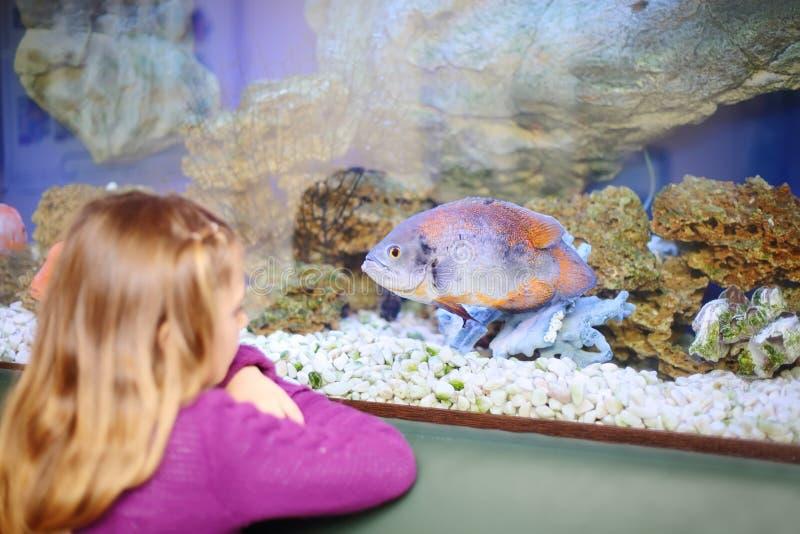 Dra tillbaka av lilla flickan som ser fisken i akvarium arkivbilder