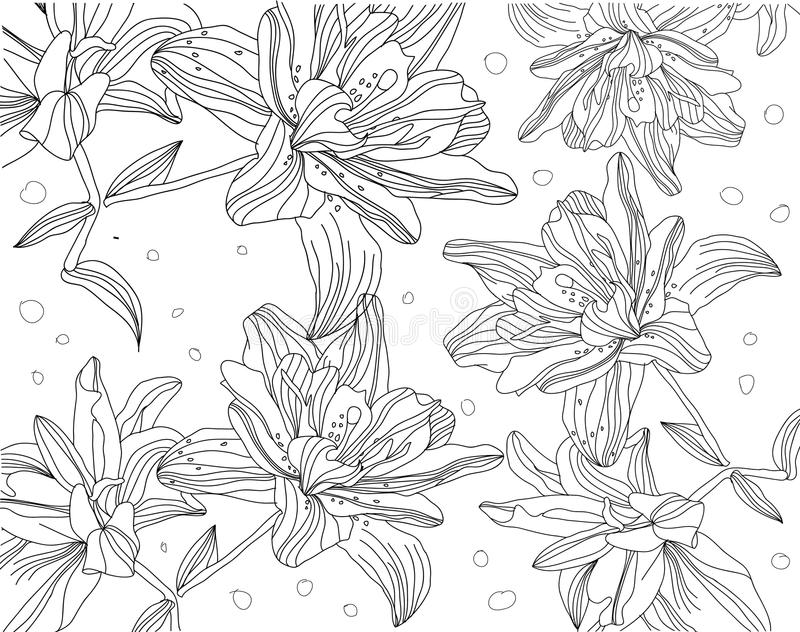 Dra upp konturerna av den monokromma teckningen av liljor på en vit bakgrund stock illustrationer