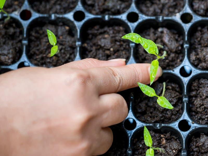Dra växterna fotografering för bildbyråer