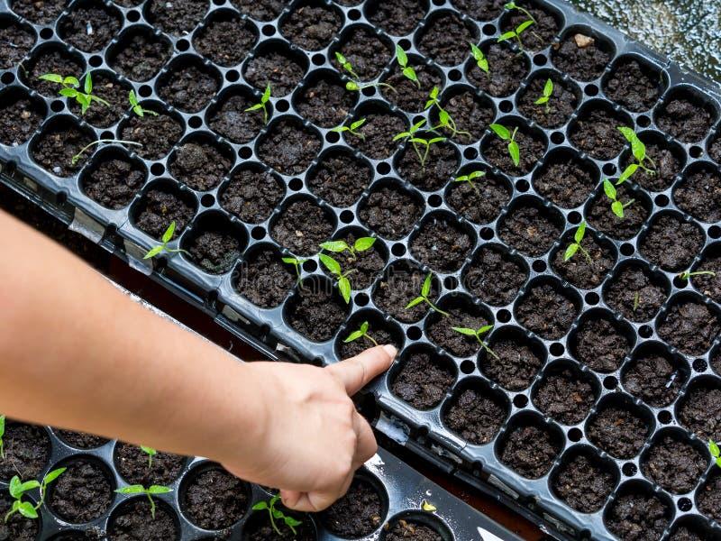 Dra växterna royaltyfria bilder