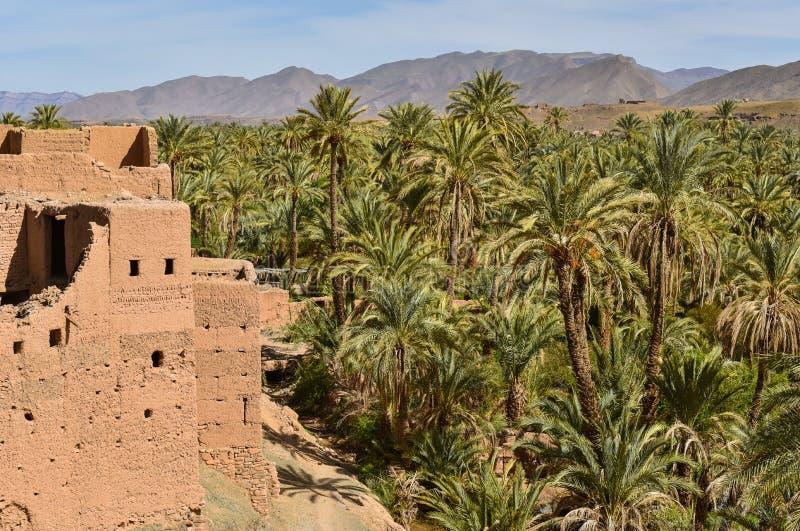 Draa dolina, palmowe plantacje, Maroko fotografia royalty free