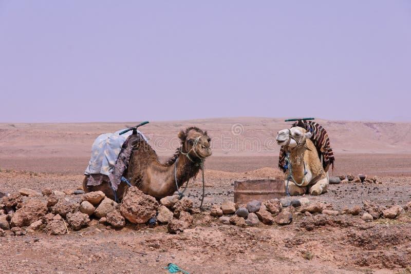 draa m около долины ouarzazate стоковое фото