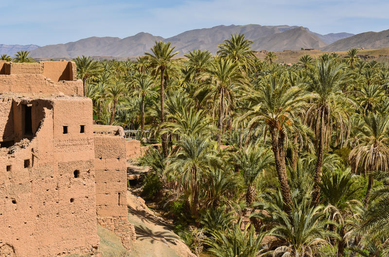 Draa valley, palm plantations, Morocco royalty free stock photography