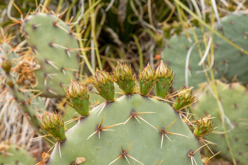 Draag Bergsleep Sedona Arizona royalty-vrije stock fotografie