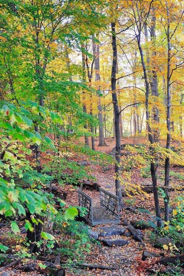 Draag het bos van de Berg royalty-vrije stock foto's