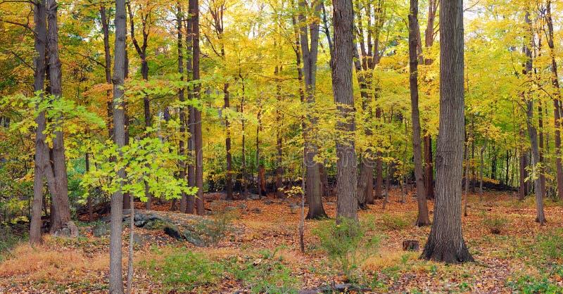 Draag het bospanorama van de Berg stock foto's
