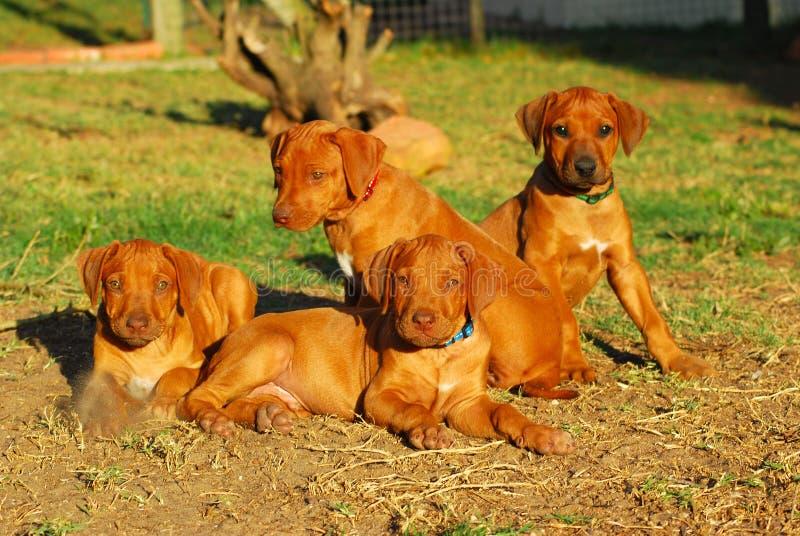 Draagstoel van puppy royalty-vrije stock foto's