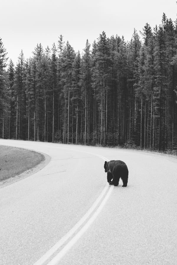 Draagt bij het Nationale Park van Banff stock fotografie