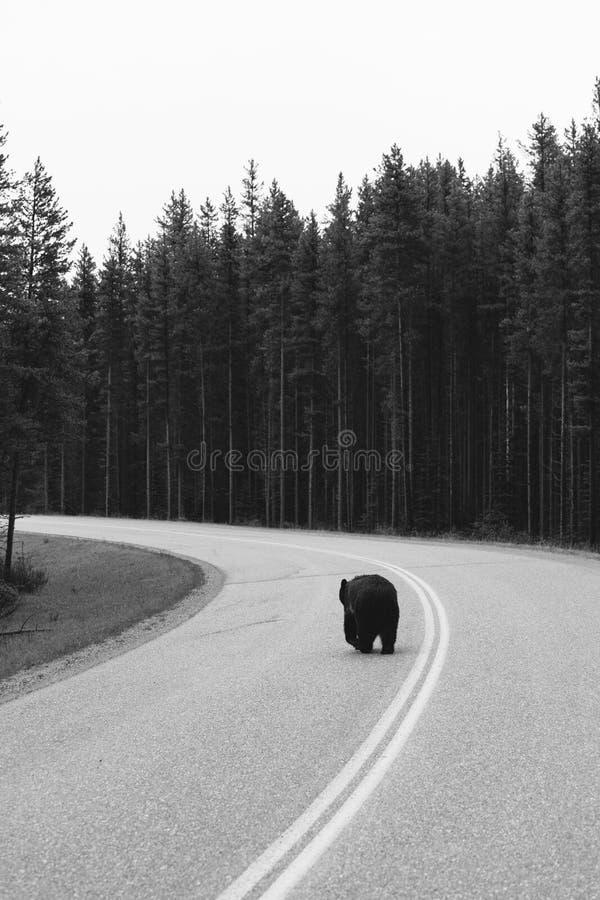 Draagt bij het Nationale Park van Banff stock foto