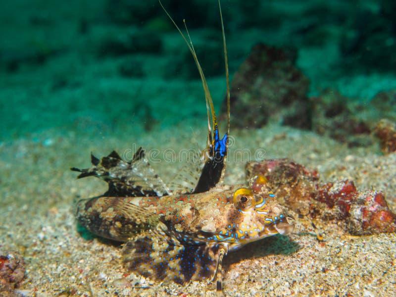 Draakvissen op het zand royalty-vrije stock foto