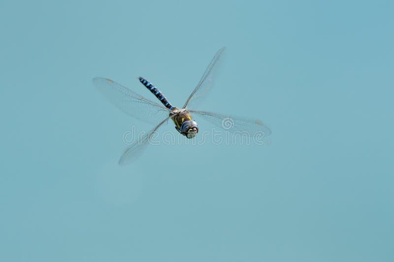 Draakvlieg tegen blauwe hemel royalty-vrije stock foto's