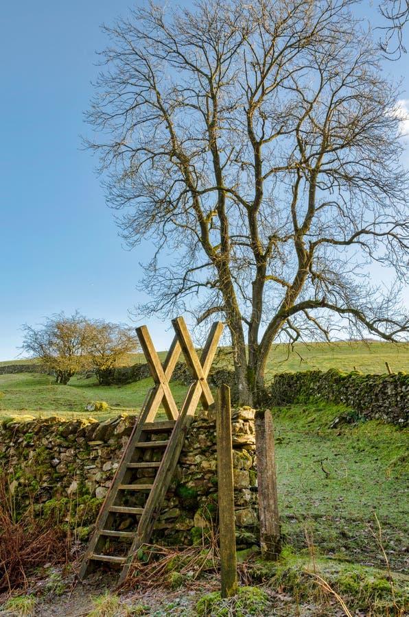 Drabinowy przełaz prowadzi wewnątrz pole z drzewem fotografia royalty free