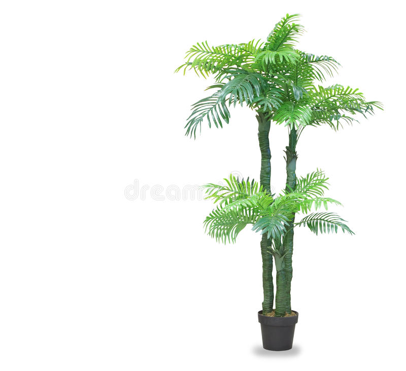 Dracaena palm in a pot isolated over white. Big dracaena palm in a pot isolated over white royalty free stock image