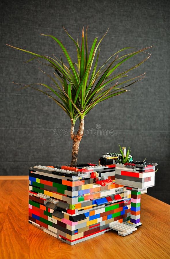 Dracaena piantata nei blocchetti del giocattolo immagini stock libere da diritti