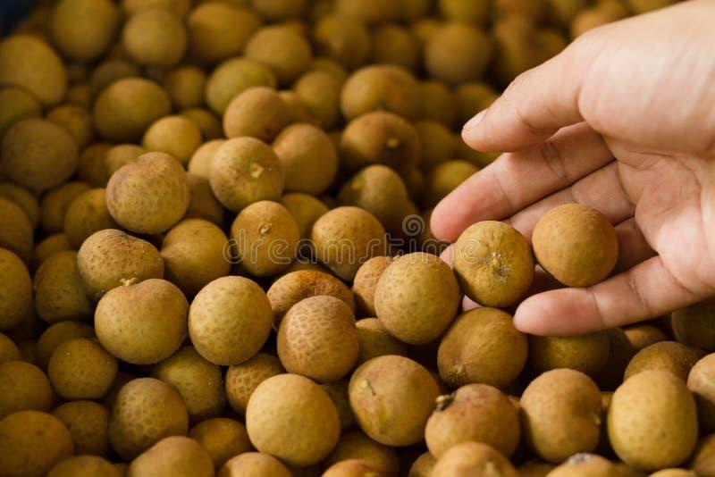 Dracheauge trägt dominierende globale Exportkraft der thailändischen Frucht Früchte stockfotos
