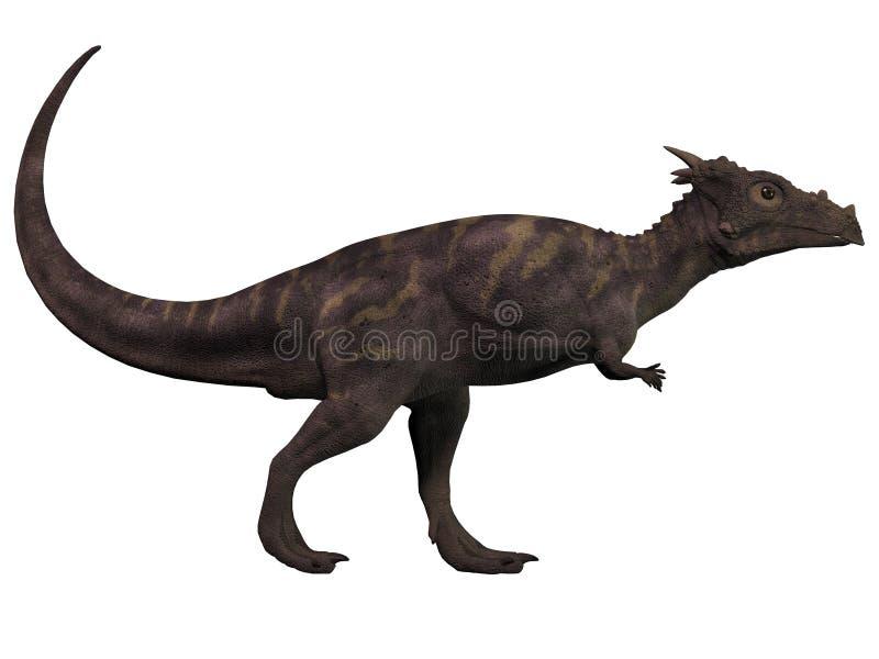 Dracorex en blanco ilustración del vector