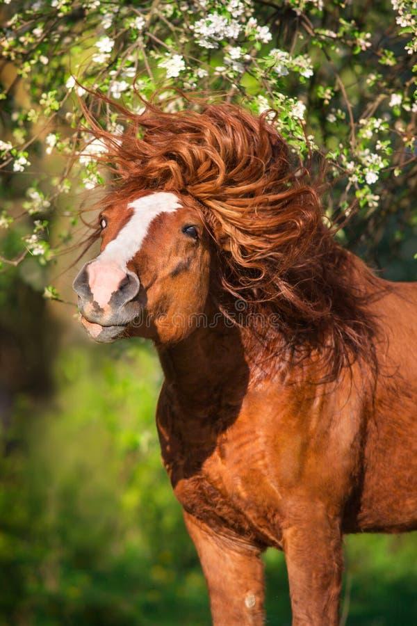Draft horse with long mane stock photo
