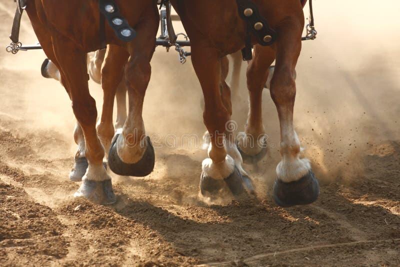 Draft Horses Pulling a Wagon royalty free stock photos