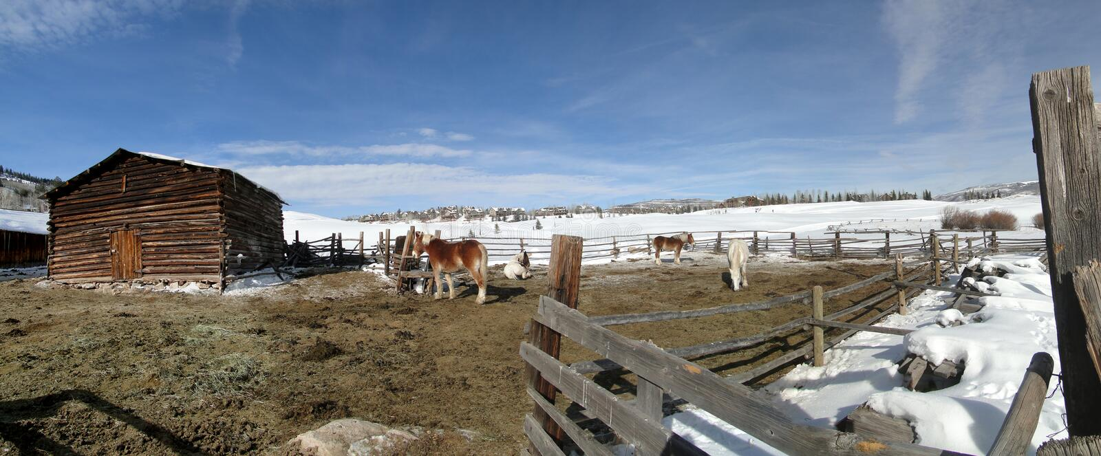 Download Draft Horses In Stable Yard Stock Photo - Image of west, cold: 12581770
