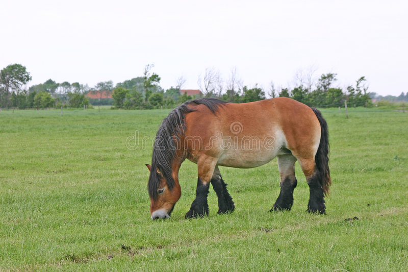 Drafthorse stock images