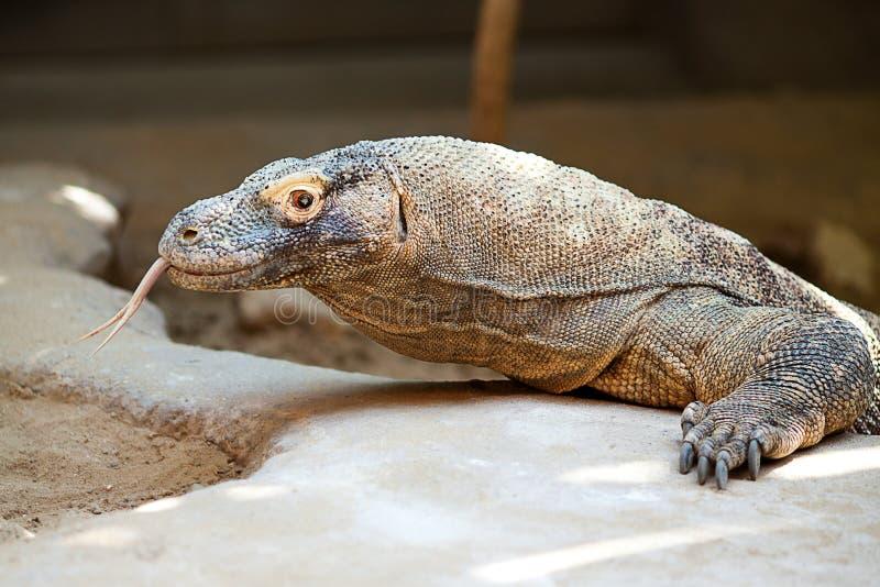 Dragão do lagarto no jardim zoológico imagem de stock